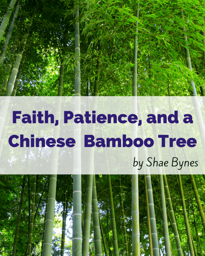 Faith Patience And A Chinese Bamboo Tree A Little R R